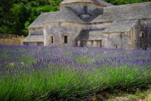 Lavendel - bilde fra Pixabay